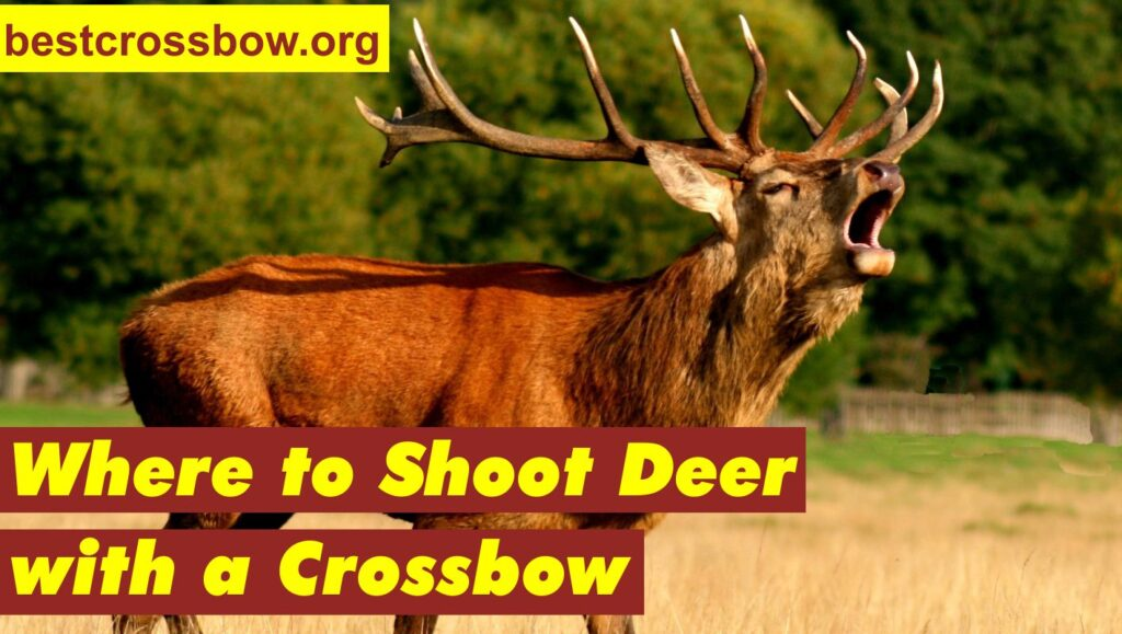 Where to shoot deer with a crossbow