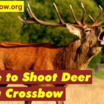 Where to shoot deer with a crossbow | Valuable Tips