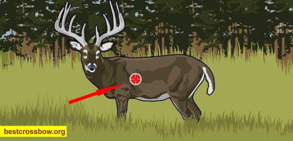 Broadside Deer Hunting