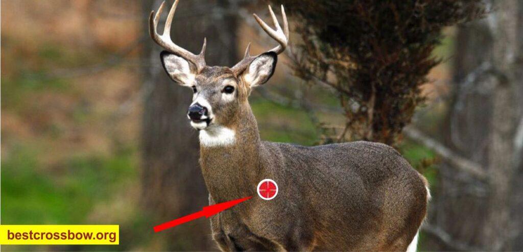 Deer Hunting front shot