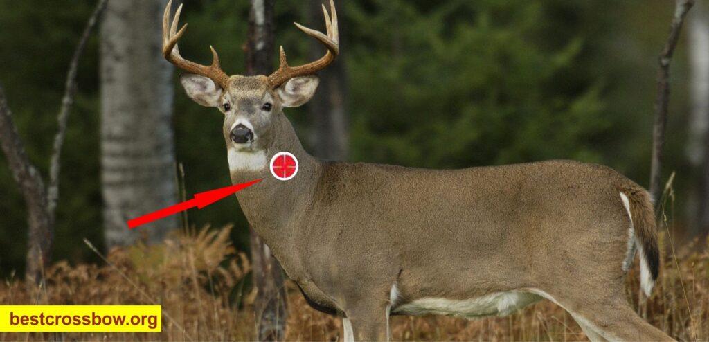 Neck shot Deer Hunting